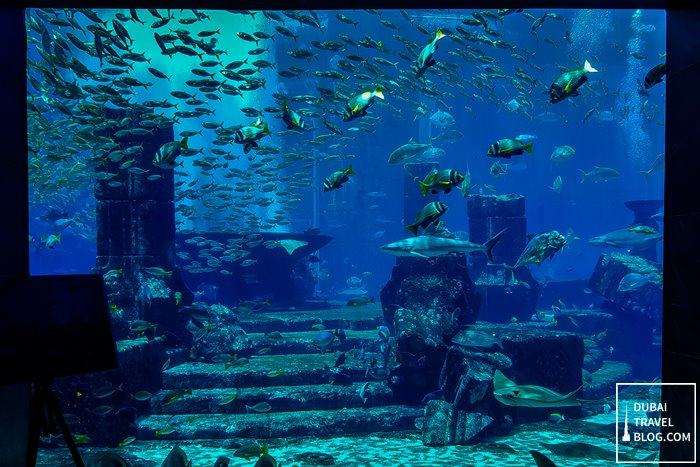 school of fishes lost chambers dubai