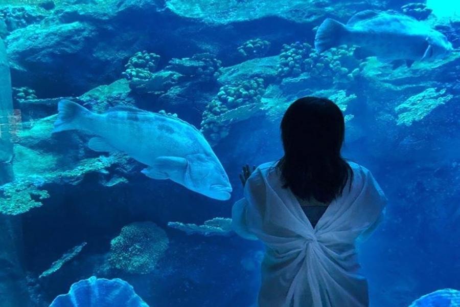 Dubai Aquarium Fish Tank