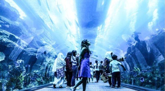Dubai Underwater Zoo